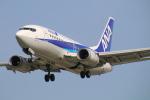 myoumyoさんが、福岡空港で撮影したANAウイングス 737-54Kの航空フォト(写真)