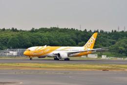 航空フォト:9V-OFI スクート (〜2017) 787-8 Dreamliner