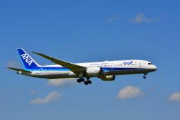 sukiさんが、成田国際空港で撮影した全日空 787-9の航空フォト(写真)