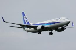 KoshiTomo✈さんが、成田国際空港で撮影した全日空 737-881の航空フォト(飛行機 写真・画像)