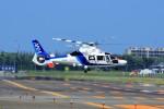 hidetsuguさんが、札幌飛行場で撮影したオールニッポンヘリコプター AS365N3 Dauphin 2の航空フォト(写真)