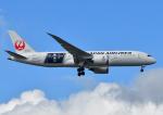 じーく。さんが、成田国際空港で撮影した日本航空 787-8 Dreamlinerの航空フォト(写真)