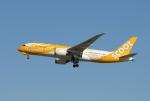 きんめいさんが、関西国際空港で撮影したスクート 787-8 Dreamlinerの航空フォト(写真)