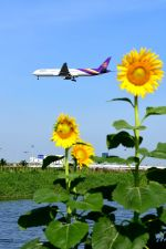 まいけるさんが、スワンナプーム国際空港で撮影したタイ国際航空 777-3D7の航空フォト(写真)