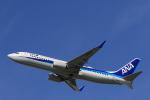 Fly Yokotayaさんが、伊丹空港で撮影した全日空 737-881の航空フォト(写真)