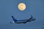 take_2014さんが、羽田空港で撮影した全日空 737-881の航空フォト(飛行機 写真・画像)