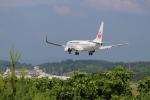 hotaruさんが、岡山空港で撮影した日本航空 737-846の航空フォト(写真)