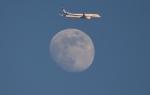 Dreamliner_NRT51さんが、成田国際空港で撮影した全日空 777-381/ERの航空フォト(写真)