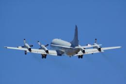 アバロン空港 - Avalon Airport [AVV/YMAV]で撮影されたアバロン空港 - Avalon Airport [AVV/YMAV]の航空機写真