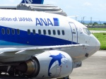 Naiki_SIsLDさんが、宮古空港で撮影したANAウイングス 737-54Kの航空フォト(写真)