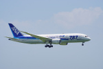 ちゃぽんさんが、羽田空港で撮影した全日空 787-8 Dreamlinerの航空フォト(飛行機 写真・画像)