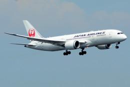 daisuke1228さんが、羽田空港で撮影した日本航空 787-8 Dreamlinerの航空フォト(飛行機 写真・画像)