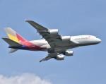 あくせるさんが、成田国際空港で撮影したアシアナ航空 A380-841の航空フォト(写真)