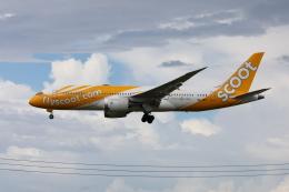 VEZEL 1500Xさんが、成田国際空港で撮影したスクート 787-8 Dreamlinerの航空フォト(写真)