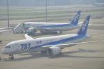 fukucyanさんが、羽田空港で撮影した全日空 787-8 Dreamlinerの航空フォト(写真)
