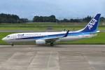 masa707さんが、鹿児島空港で撮影した全日空 737-881の航空フォト(写真)