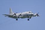 NOTE00さんが、三沢飛行場で撮影した海上自衛隊 P-3Cの航空フォト(写真)
