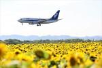 にしやんさんが、女満別空港で撮影した全日空 737-781の航空フォト(写真)