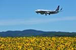 にしやんさんが、女満別空港で撮影した全日空 737-881の航空フォト(写真)