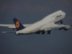 さゆりんごさんが、羽田空港で撮影したルフトハンザドイツ航空 747-830の航空フォト(写真)