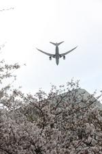 turt@かめちゃんさんが、伊丹空港で撮影した全日空 787-8 Dreamlinerの航空フォト(写真)