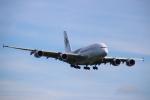 まーちらぴっどさんが、成田国際空港で撮影したマレーシア航空 A380-841の航空フォト(写真)