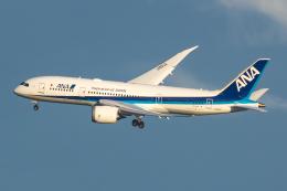 Noevirさんが、羽田空港で撮影した全日空 787-8 Dreamlinerの航空フォト(写真)