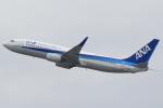 キイロイトリさんが、関西国際空港で撮影した全日空 737-881の航空フォト(写真)
