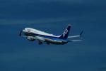 FRTさんが、伊丹空港で撮影した全日空 737-881の航空フォト(写真)