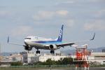 徳兵衛さんが、伊丹空港で撮影した全日空 737-881の航空フォト(写真)