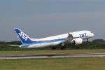 やまやんさんが、宮古空港で撮影した全日空 787-8 Dreamlinerの航空フォト(写真)