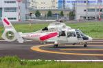 いおりさんが、東京ヘリポートで撮影した東邦航空 AS365N2 Dauphin 2の航空フォト(写真)