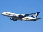 れもねりあさんが、成田国際空港で撮影したシンガポール航空 A380-841の航空フォト(飛行機 写真・画像)