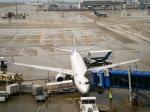 さんぜんさんが、中部国際空港で撮影した全日空 737-881の航空フォト(写真)