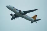 FRTさんが、関西国際空港で撮影したタイガーエア台湾 A320-232の航空フォト(飛行機 写真・画像)