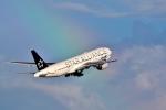 SKY TEAM B-6053さんが、羽田空港で撮影した全日空 777-281の航空フォト(写真)