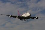 shootingstarさんが、成田国際空港で撮影したタイ国際航空 A380-841の航空フォト(写真)