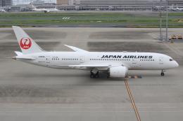 キイロイトリさんが、羽田空港で撮影した日本航空 787-8 Dreamlinerの航空フォト(写真)