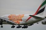 msrwさんが、成田国際空港で撮影したエミレーツ航空 A380-861の航空フォト(写真)