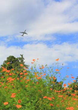 タミーさんが、成田国際空港で撮影したエアソウル A321-231の航空フォト(写真)