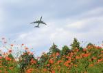 タミーさんが、成田国際空港で撮影したキャセイパシフィック航空 747-867F/SCDの航空フォト(写真)