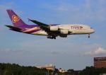 タミーさんが、成田国際空港で撮影したタイ国際航空 A380-841の航空フォト(写真)