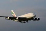 anyongさんが、成田国際空港で撮影したエミレーツ航空 A380-861の航空フォト(写真)