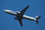 杉の裏さんが、羽田空港で撮影した全日空 737-8ALの航空フォト(飛行機 写真・画像)