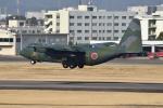 Tango-4さんが、名古屋飛行場で撮影した航空自衛隊 C-130H Herculesの航空フォト(写真)