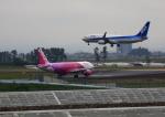 タミーさんが、仙台空港で撮影した全日空 737-881の航空フォト(写真)