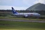 さんみさんが、新石垣空港で撮影した全日空 737-881の航空フォト(写真)