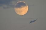 yoko_777さんが、羽田空港で撮影した航空自衛隊 747-47Cの航空フォト(写真)