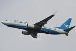 camelliaさんが、成田国際空港で撮影した厦門航空 737-86Nの航空フォト(写真)