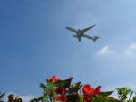 HNDマンさんが、成田国際空港で撮影したフィンエアー A350の航空フォト(写真)